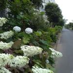 多摩住の花壇